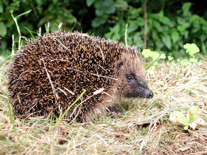 Fifty Ways to Build a HedgehogHouse