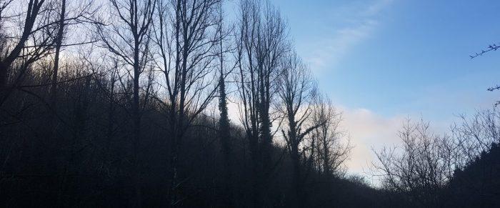 """A culture is no better than its woods"" – W H Auden, ""Bucolics"""