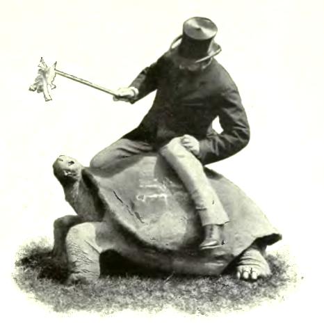 rothschildtortoise