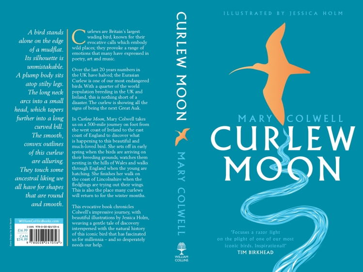 cover curlew moon